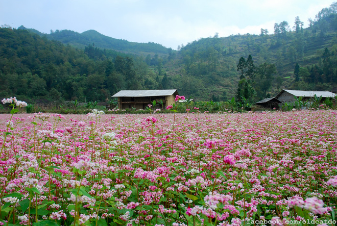 TRIANGLE FLOWER CIRCUIT IN HA GIANG
