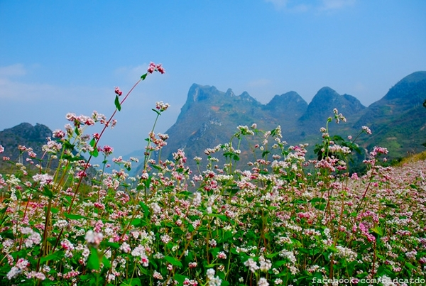 Flower Triangular Circuit In Ha Giang